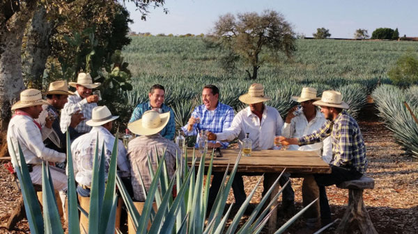 Introduction to Tequila Avión